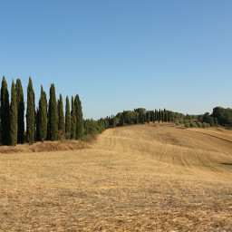 freetoedit landscape nature fields trees cypresses travel tuscany italy myphotography
