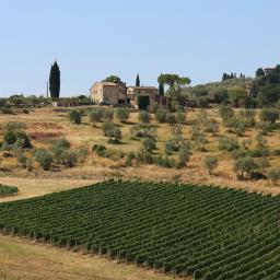 freetoedit myphotography landscape fields vineyards olivegroves travel tuscany italy