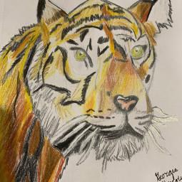 tigerdrawing