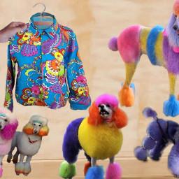 peaceandloveshirt design poodles freetoedit ircshirtdesign shirtdesign
