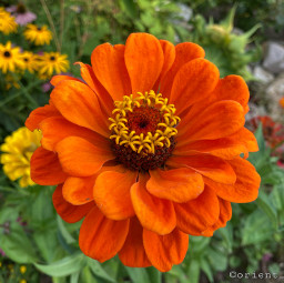 freetoedit flowershoutout simple flower garden photography orient_photos