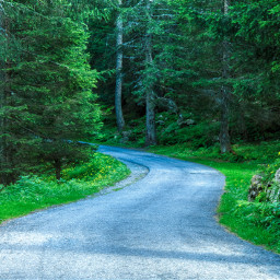 freetoedit photography forest landscape road leadinglines mountain
