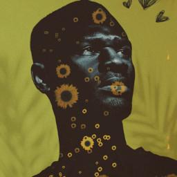 freetoedit srcsunflowersplash sunflowersplash