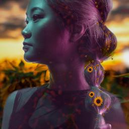 freetoedit unsplash srcsunflowersplash sunflowersplash