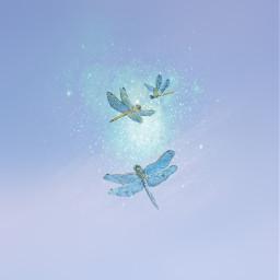 dragonflies freetoedit
