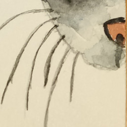 watercolour gatito local