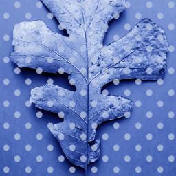 painttool dots polkadots leaf fill