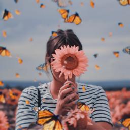 flowers butterflies freetoedit