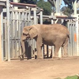 elephant pcadaytoremember adaytoremember
