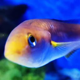 fish curiosity underwater