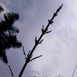 photography nature earth plants aditings spreadlove freetoedit