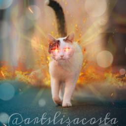 gato fuego freetoedit picsart