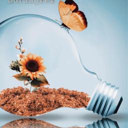 freetoedit lampada girasol borboleta picsart picsartbrasil remix remixit