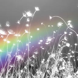 rainbow mask flowers gray white silhouette