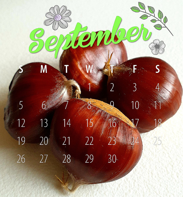 #chestnuts #chestnut #september #helloseptember #autumn #fall