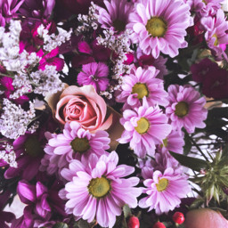 flower photography fowerpower rosa colorful cute vintage nature summer interesting art freetoedit