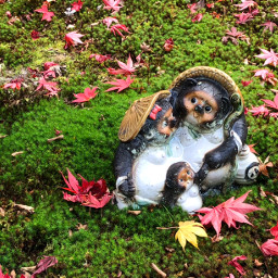 autumn kyoto japan nature tanuki moss pcautumninmycity autumninmycity
