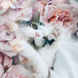 cat cute flower pink freetoedit