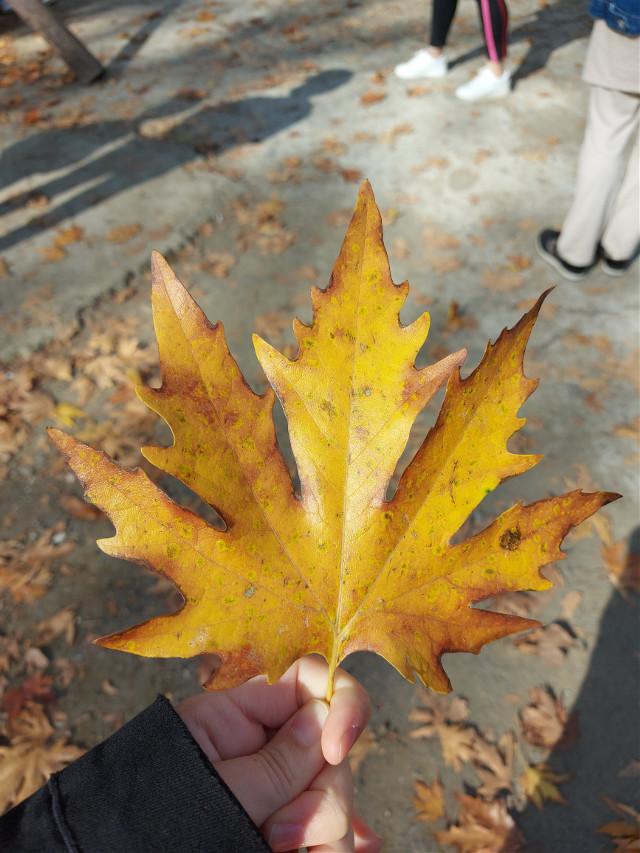 #fall #likeforlikes #freetoedit