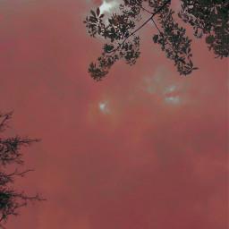 wallpaper sky sunset leaves tree pink freetoedit