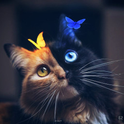 cat butterfly sun background be-creative freetoedit be