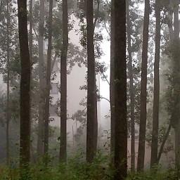freetoedit trees myphoto naturephotography fog foggy foggyday