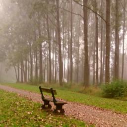 freetoedit myphoto naturephotography trees fog foggy foggyday