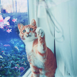 freetoedit cat fish ocean window home play catch challenge srcpinkfishies pinkfishies