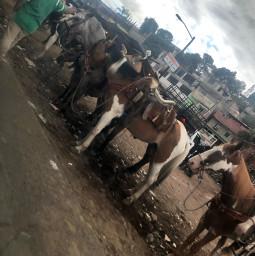 freetoedit horses horsebackriding horsephotography
