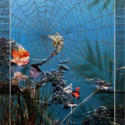 photography editing interesting photo spider art