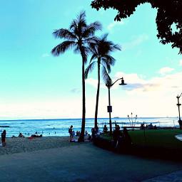 freetoedit palmtrees outdoors photography photo ocean hawaii blue