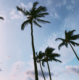 freetoedit palmtrees summer silhouette sunset clouds sky