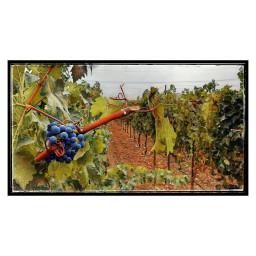 winery grapes vineyard californiawine local