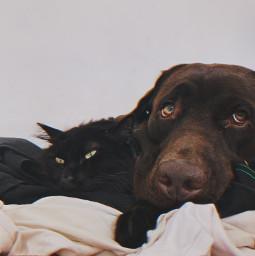 freetoedit dog cat blackcat chocolatelabrador preset replay
