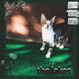 freetoedit folklore taylorswift cat catedit s