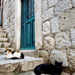 photography travel architecture city street cats freetoedit
