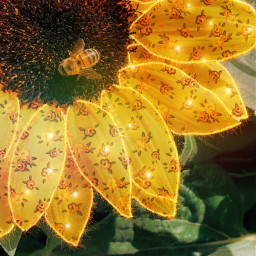 flowers outline primavera spring jardimbotânico yellow girasssol mastercontributor freetoedit