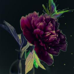 flower glitter magical brilho spring master mastercontributor freetoedit