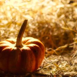 photography hellooctober autumn pumpkin backlight warmcolor warmlight landscape freetoedit local