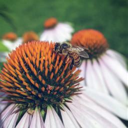 honeybee bee flower insect adventure