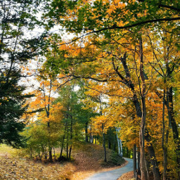 freetoedit autumn fall path nature leaves trees naturephotography outside explore road park backgrounds