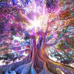 freetoedit tree magicaltree colorful rainbowcore rainbow magical