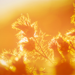 photography sunset backlight landscape autumn beautiful emotions warmlight freetoedit local