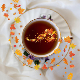 freetoedit ircautumntea autumntea