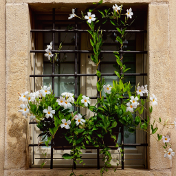 freetoedit window oldwindow flowers myphotography