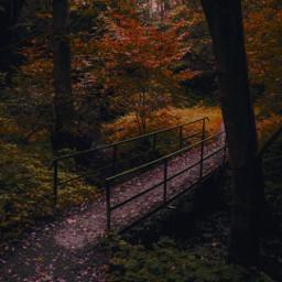 bosquemagico bosque bosques paisajes paisaje paisajehermoso paisajesbellos paisajesnaturales paisajebonito paisajespreciosos paisajeshermosos naturalezaperfecta naturaleza naturelovers vidanatural fotography fotographynature forografia campogrande campoabierto campos campo camposverdes otoño otoñomagico freetoedit