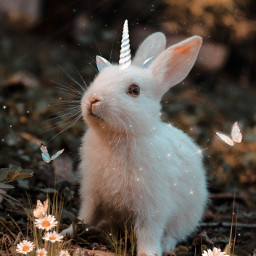 unicorn coelhinho magic flower freetoedit picsart