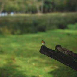 bird france animal freetoedit