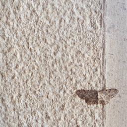 minimalism insect nature butterfly moth thewall outdoors stonewall texturedwall minimal monochromatic urbannature upclose minimalphotography freetoedit