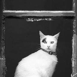 exploringthecitystreets house veryoldhouse window cat urbanfeline catonthewindow beautifulcat catstaring catsofpicsart petsandanimals urbanexploration blackandwhitephotography freetoedit